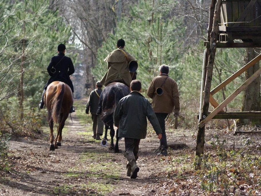 activité loisirs chasse parc cheval sanglier chevreuil chateau de salvert foret de salvert